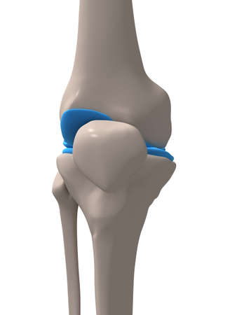 human knee Stock Photo - 1066832