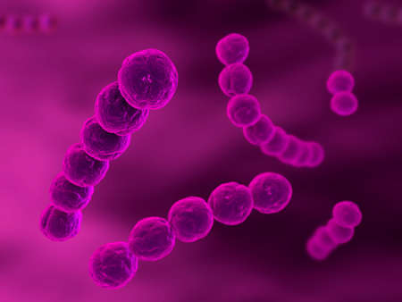 schyzomycete: streptococcus Stock Photo