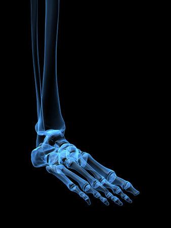 human foot photo