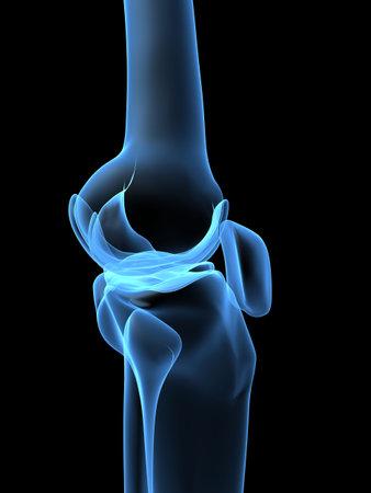 cartilage: human knee
