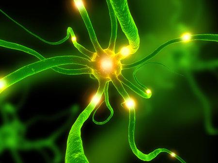 dendrites: active neurone