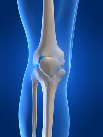 human knee photo