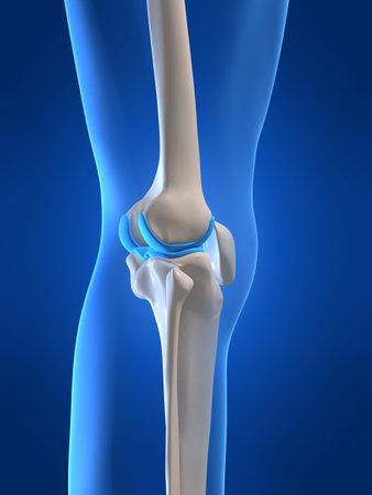 huesos: rodilla humana