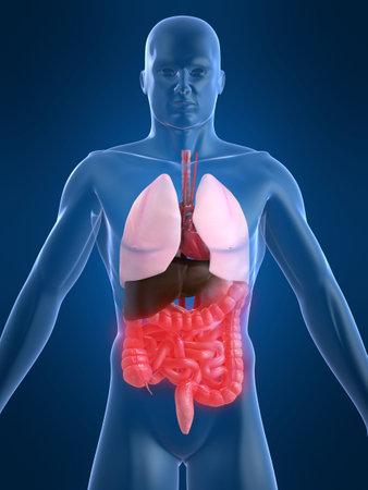 human intestines Stock Photo - 1066529