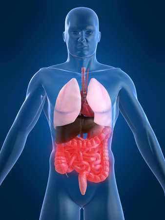 organi interni: intestini umani