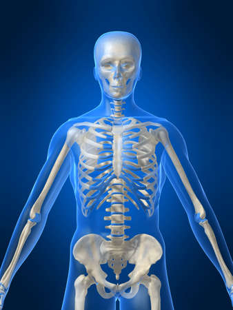 human skeleton Stock Photo - 1066851