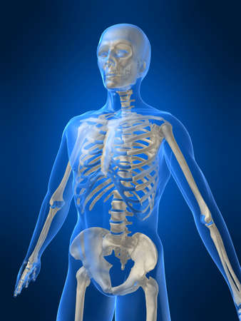 ilium: human skeleton Stock Photo