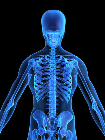 ilium: skeletal back Stock Photo