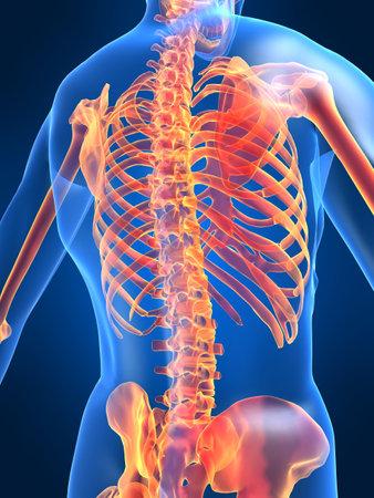 backbone: skeletal back Stock Photo