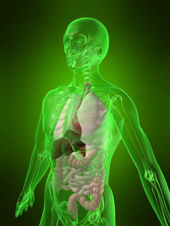 human organs Stock Photo - 1066956