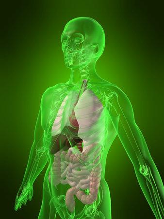 vitals: human organs