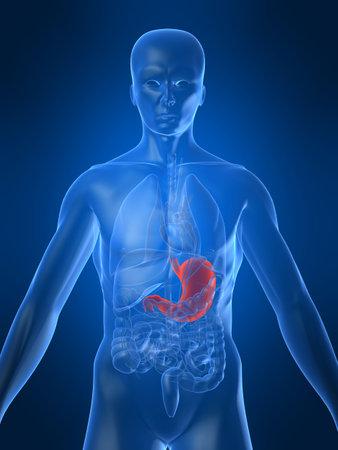 gastrointestinal: destac� el est�mago  Foto de archivo