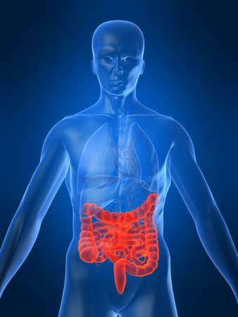 highlighted intestines Stock Photo - 1066963