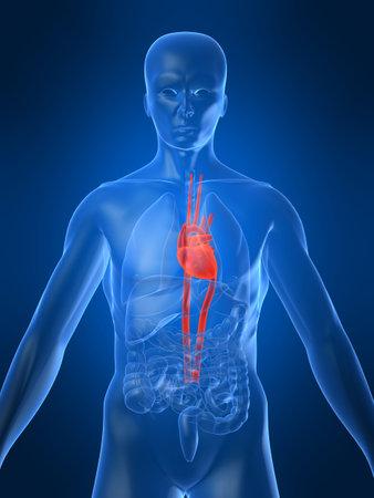 highlighted heart Stock Photo - 1066964