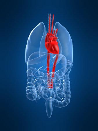 gastrointestinal: Destac� coraz�n