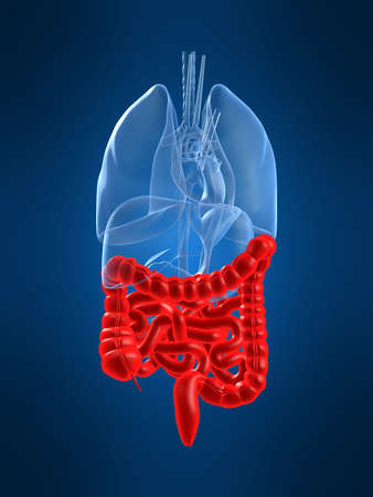 destac� los intestinos  Foto de archivo - 1066975