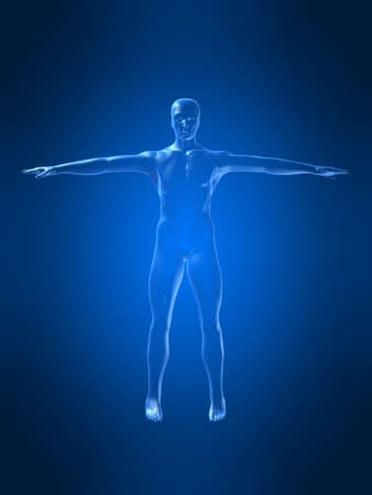 transparent male anatomy: body shape