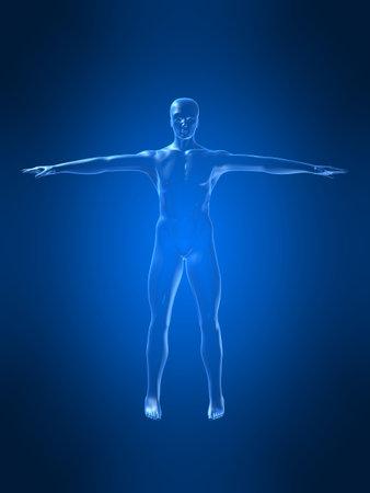 body shape: forma del corpo