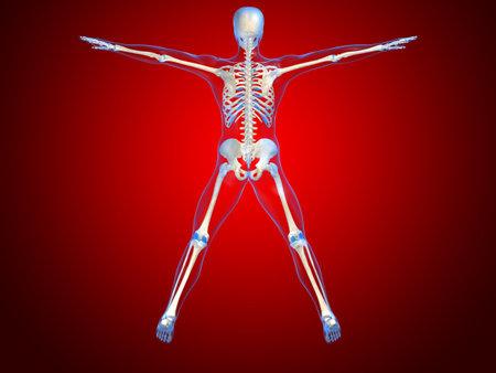 human skeleton illustration Stock Illustration - 1297755