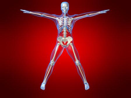 human skeleton illustration Stock Illustration - 1297754