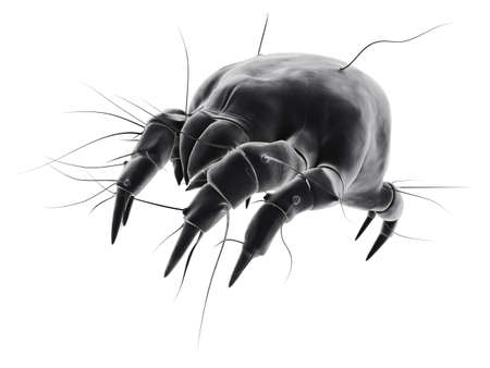 isolated mite Stock Photo - 1297761