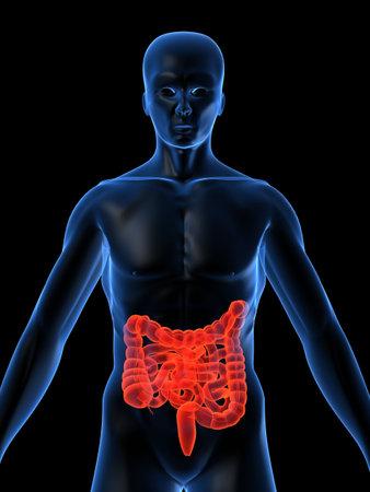 intestines: destac� los intestinos  Foto de archivo