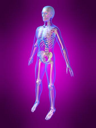 human skeleton Stock Photo - 1354699