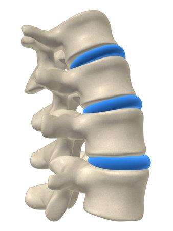 columna vertebral: parte de una columna
