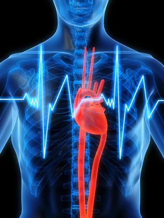 pulso: los latidos del coraz�n  Foto de archivo