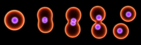 division: cell division