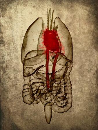 intestin: anatomie grunge Banque d'images