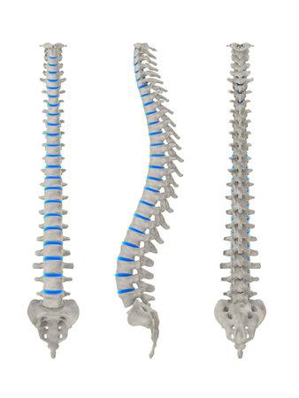 medula espinal: diferentes espinas