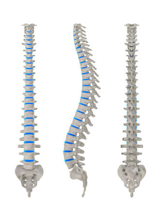 lumbar spine: different spines