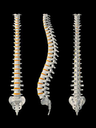 with spines: diffrent spines Stock Photo