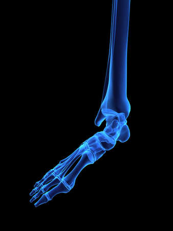 x-ray foot photo
