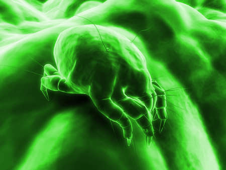 isolated mite photo