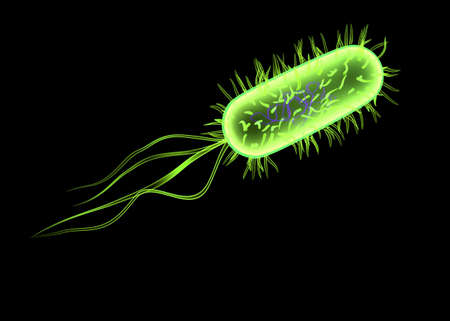 microbes: isolated bacteria