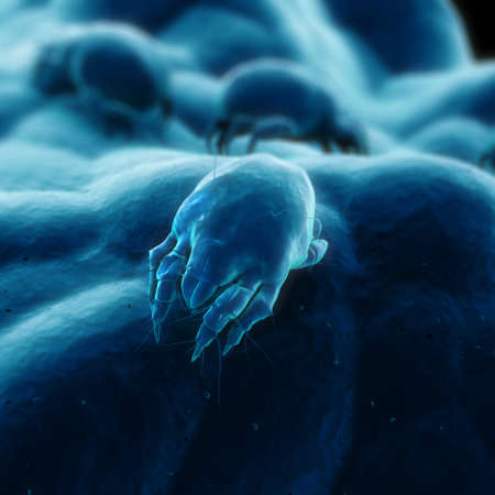 an insect: isolated mite