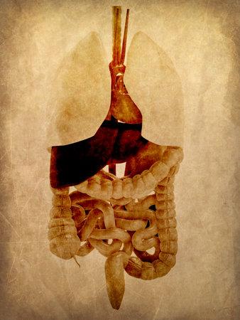grunge anatomy Stock Photo
