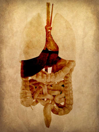 grunge anatomy Фото со стока