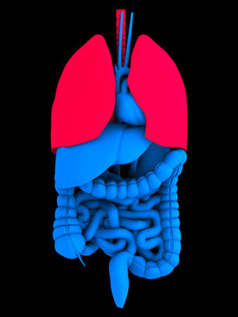 viscera: human organs