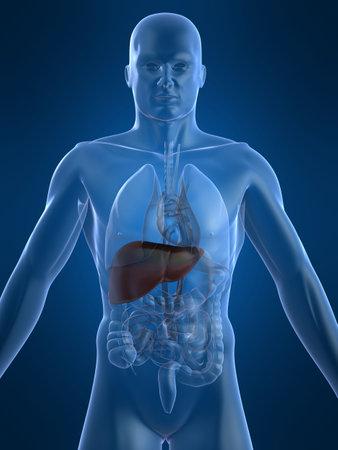 vitals: human liver