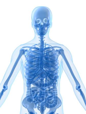 lungcancer: human anatomy Stock Photo