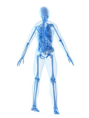 human anatomy Stock Photo - 2020924