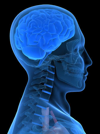 cerebra: human x-ray head with brain