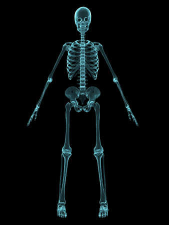 ilium: x-ray human skeleton - front view