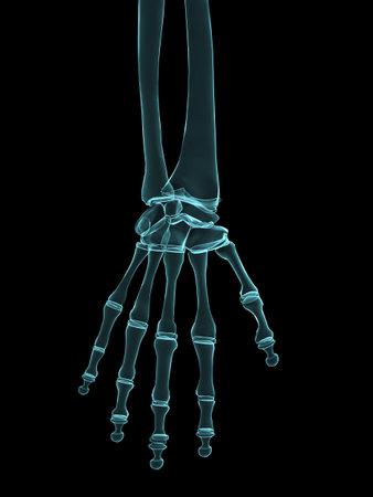 x-ray human hand