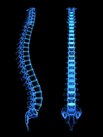 3d spine - different views