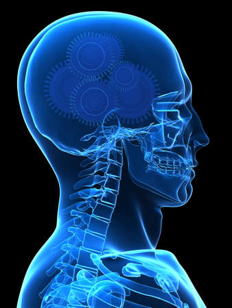 human x-ray head with gears Stock Photo - 2846258
