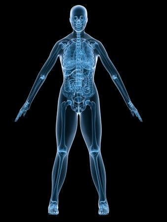 x-ray anatomy - female skeleton - front side Stock Photo - 2846208